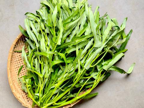 話題のアジアン野菜!幻の空芯菜!オーガニックで大満足の味!【有機空芯菜1kg】案外ぺろりと食べられるサイズ!和洋中にもよく合います!