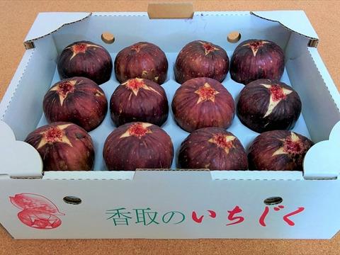 《自家栽培・産地直送》甘くて美味しい完熟いちじく 桝井ドーフィン12個入り《陽ちゃんのいちじく》