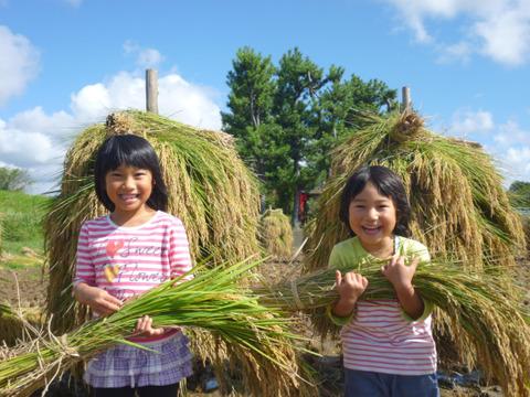 太陽の恵みいっぱい‼ 天日干し特別栽培ミルキークイーン 5kg 玄米(米おこし付き)