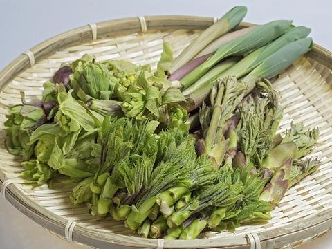 【天然無農薬】お約束!!妙高山の山菜をドーン!!とお得なセット4種確約(500g)山菜詰め合わせ 山菜 ミックス