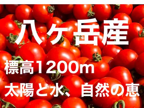 パクパク  ミニトマト  味濃いめ 八ヶ岳産  一人暮らしの方にもお勧め 箱込約1kg