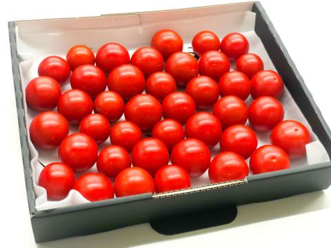 【数量限定】平均糖度8度以上!珠玉のフルーツトマト(1.4kg)