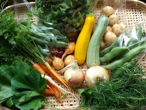 旬の野菜詰め合わせ(5~8品目)無農薬、無化学肥料、微生物酵素農法