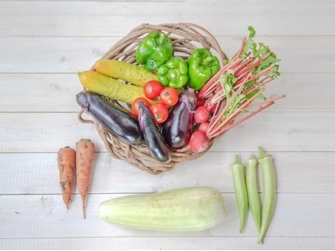 『まえむき。』の、自然と一緒に育てた旬の野菜セット6~7種類