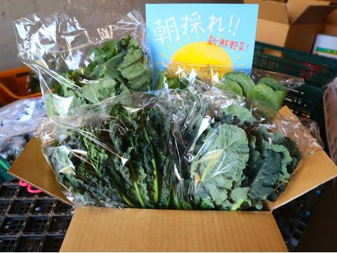【3月7日週限定】★冬の寒さで糖度が グッ と上がった★野菜セット