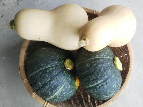 h-toshiさん リクエスト  田口農園 徳島イチオシ! 野菜セット  世界農業遺産 ブランド認定野菜詰合せ