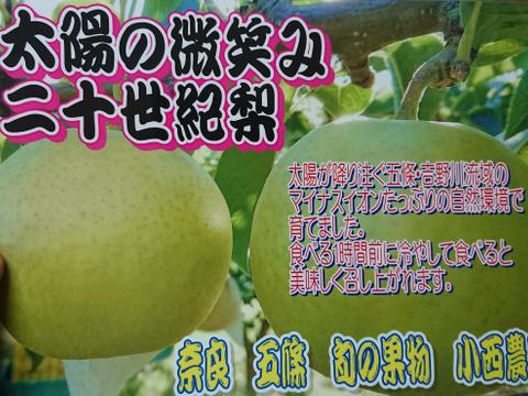 秋の味覚!20世紀梨(7〜8玉入)