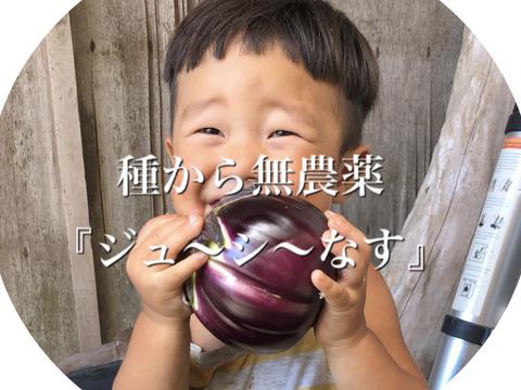 お得な2キロ✨『ジュ〜シ〜』なす!茄子がおいしい!固定種の自然栽培です!