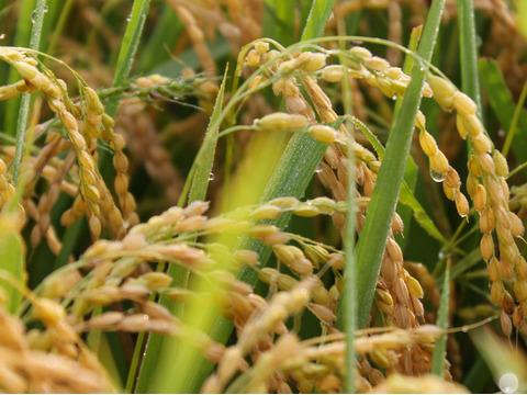 山形置賜飯豊【はえぬき 玄米10kg】令和2年秋収穫 22年連続特A