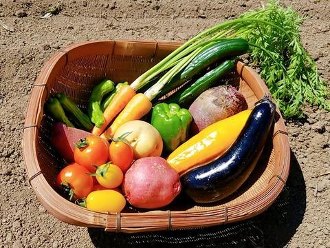 旬の野菜セット【少量サイズ約7~9種類:農薬不使用】