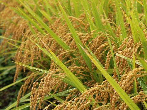 山形置賜飯豊【こしひかり 玄米10kg】令和2年秋収穫 食味スコア93点 生産者自慢の逸品
