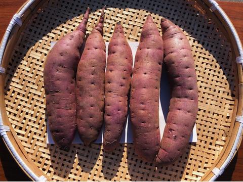 《日本一のさつまいも農家》貯蔵1ヶ月茨城県産さつまいも(紅はるか)M~2Lサイズ 5kg