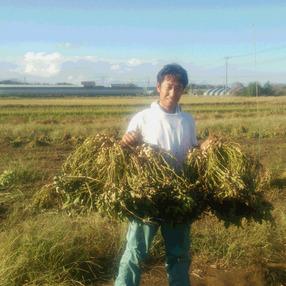 九十九里潮風野菜 和田農場