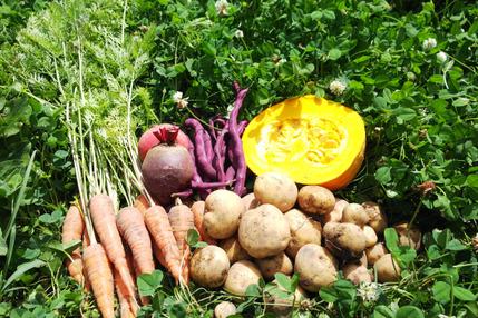季節の野菜 小幸セット 自然栽培 無農薬、無肥料