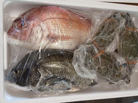 【一日三組限定】鮮魚セット(1~3キロ入り・100サイズにて)