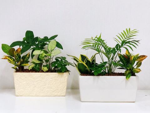 【敬老の日ギフト】幸せを運ぶ観葉植物のおまかせ寄せ植え(4~5品種)