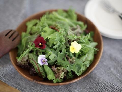 鮮度抜群!9~11種のシャキシャキ野菜のサラダセット(70g×7つ)【栽培期間中農薬不使用】