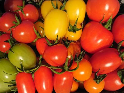 【590件突破に感謝!】5~7種の詰め合わせ! 味の濃~いミニ・中玉トマト!お任せ詰め合わせセット(1kg)
