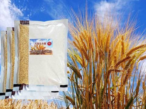 美味しく腸活!もち麦 キラリモチ 900g さらにお得な3個セット 令和2年産 愛知県産 希少品種 農薬・化学肥料不使用