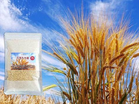 国産 もち麦 キラリモチ お試し250g  農薬・化学肥料不使用 希少品種 愛知県産 令和元年産