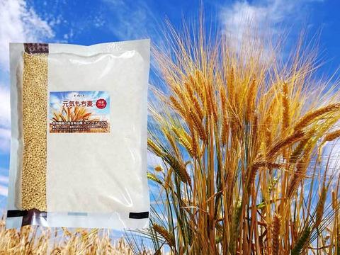 最終1袋  美味しく腸活!もち麦 キラリモチ 900g 令和2年産 愛知県産 希少品種 農薬・化学肥料不使用