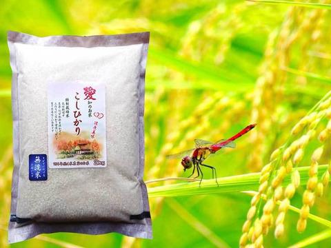 新米こしひかり 白米 無洗米 お試し2kg 備蓄米にもOK 愛知県産100%