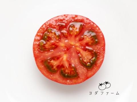 旨味がじゅわっと溢れ出る!樹上完熟トマト約1キロ