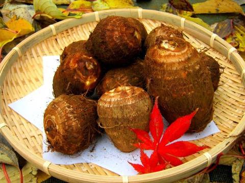 【日本農業遺産】落ち葉堆肥でじっくり育ったしっとり里芋3キロ