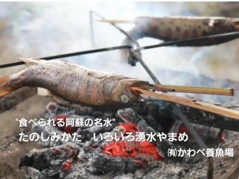 阿蘇から届く 幻の魚・かわべの湧水やまめ(5匹冷凍)