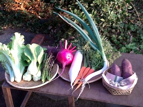 自然栽培野菜一人暮らしの方にオススメセット【7〜9 種類】