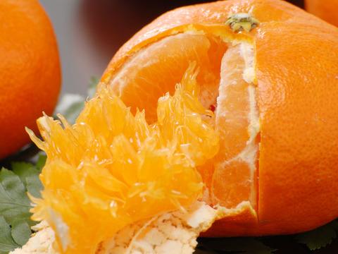 話題の希少柑橘 甘平訳アリ5㎏