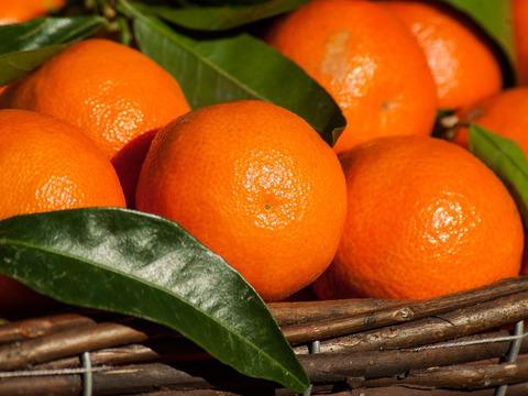 当農園売上第3位❗️☆畑直送☆大特価!こだわり有機栽培野菜7品セット+畑で採れた果物をプレゼント‼️