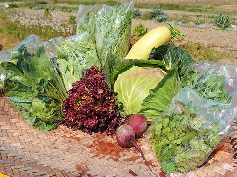 農薬、除草剤不使用 旬の野菜セット[6品目] 新鮮朝採り