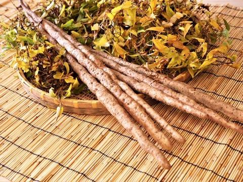 レジスタントスターチを多く含んだ山芋の王様 自然薯1㎏【熨斗付き】