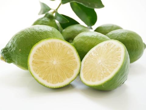 【家庭用】グリーンレモン 5kg 【みかん職人武田屋】