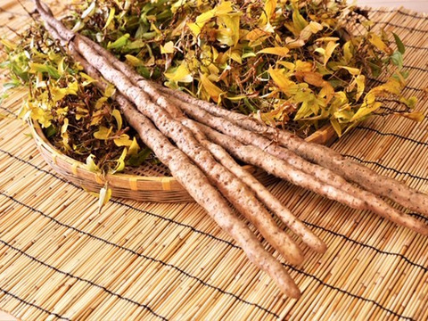 レジスタントスターチを多く含んだ山芋の王様 自然薯1.5㎏【熨斗付き】