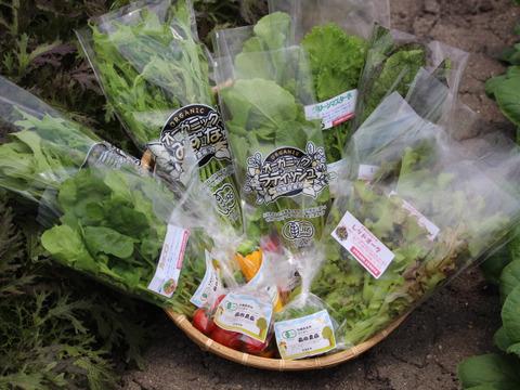 葉物野菜セット 植物性で育てた完全無農薬の葉野菜ブランド 有機JAS