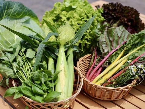 【超新鮮】旬のお野菜セット!5種類+おまけ☆ ヤングコーン必ず入ってます♪