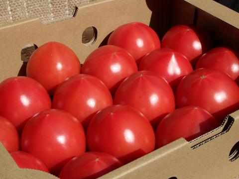 【規格外】うま味成分たっぷりずっしり重い完熟トマト【今が旬です!】2㎏程度 【良品】