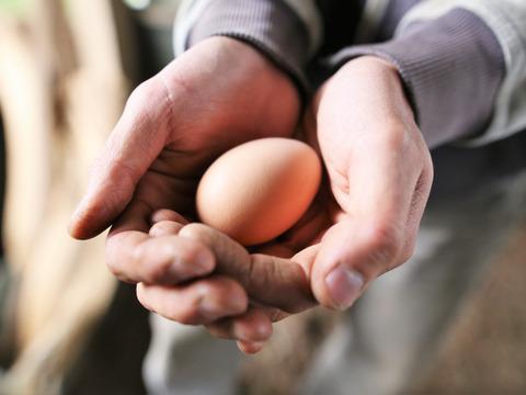 【自然卵】超薄飼い!発酵利用の自然卵(20個)