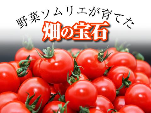 【常温便】あと15日‼️【お試し】ソムリエミニトマト プラチナ500gとダイヤ500gの食べ比べセット