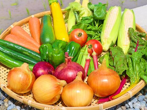 【淡路島産】【10個限定】初夏の野菜セット(80サイズ)