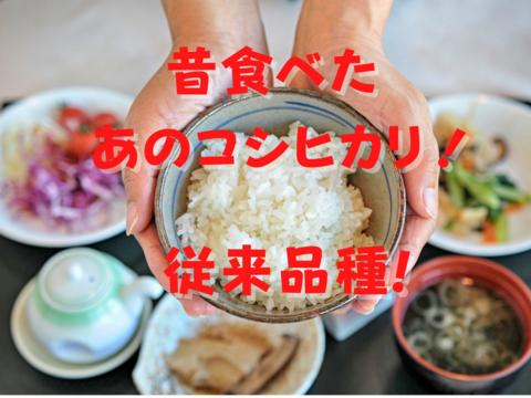 希少な従来品種!新潟県妙高産 コシヒカリ 【白米】*1袋 (3kg)  お試しパック! こしひかり!