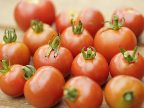 晴れの国 岡山【玉手箱セット】(野菜8種、卵10個)夏ギフト
