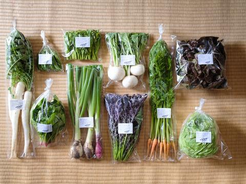 野菜ボックス(8〜10品)