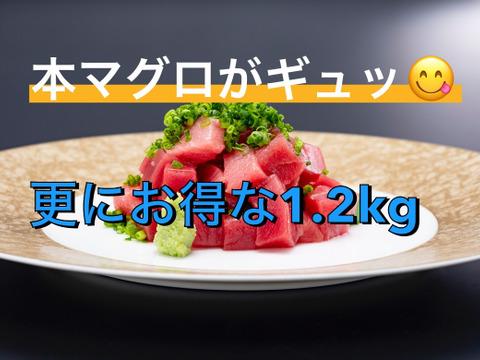 鮪の旨味凝縮!みやび本鮪赤身切り落とし 1.2kg(不揃い柵4本~7本:約12人前)※600gよりお値打ち!