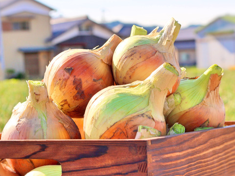『大好評』1度は食べたい淡路島のたまねぎ!加熱するとまるでフルーツ!【完熟!淡路島産】たまねぎ (2.5kg)