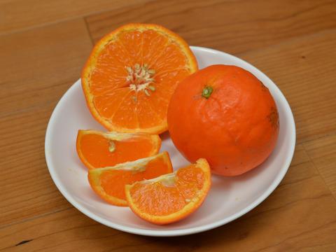 【訳あり】まるで食べるジュース!セミノール  6kg (樹上完熟、袋掛け栽培)