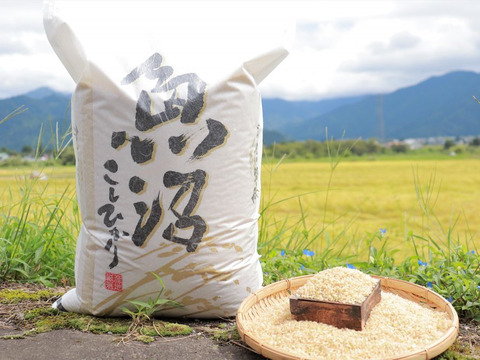 新米予約】令和3年産 南魚沼産コシヒカリ 10㎏(玄米)