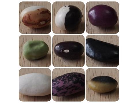 【選べる4種】ぽっけの新豆セット【北海道自然栽培】メール便
